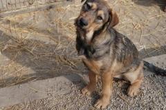 Lilo (2)