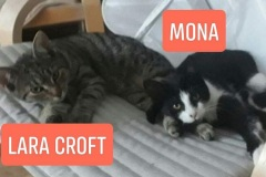 Mona-3