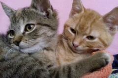 Rudi-és-Sissy