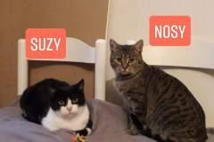 Suzy_und_Nosy_11