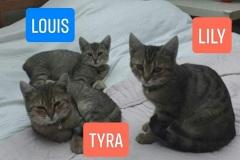 Tyra-4