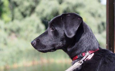 Hunderegistrierung/Hundesteuer