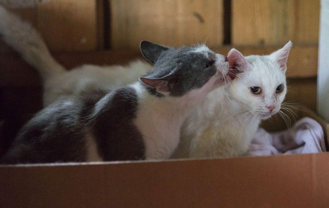 Fanni und Lili