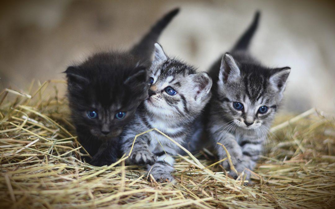 Katzen in Not