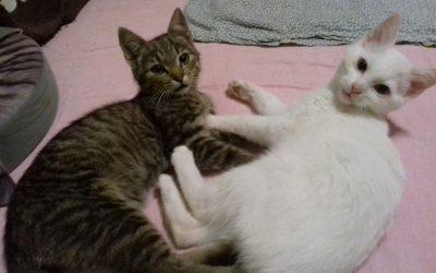 Bella und Valentine