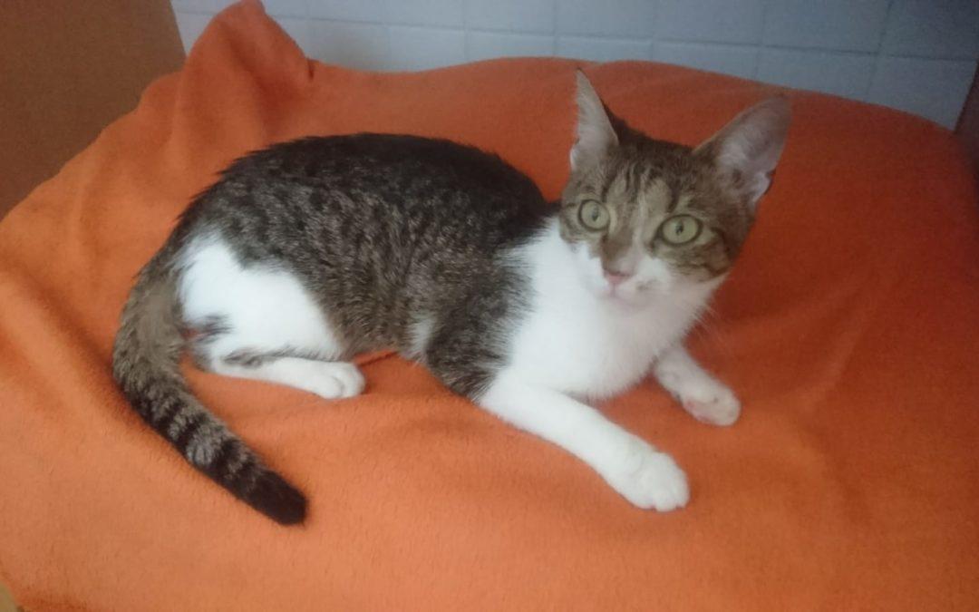 Vermittlungshilfe Katze Missy