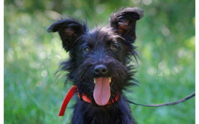 Dognet Hundevermittlung Hunde Suchen Ein Zuhause