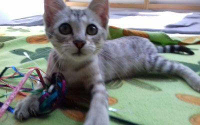Maya Katze