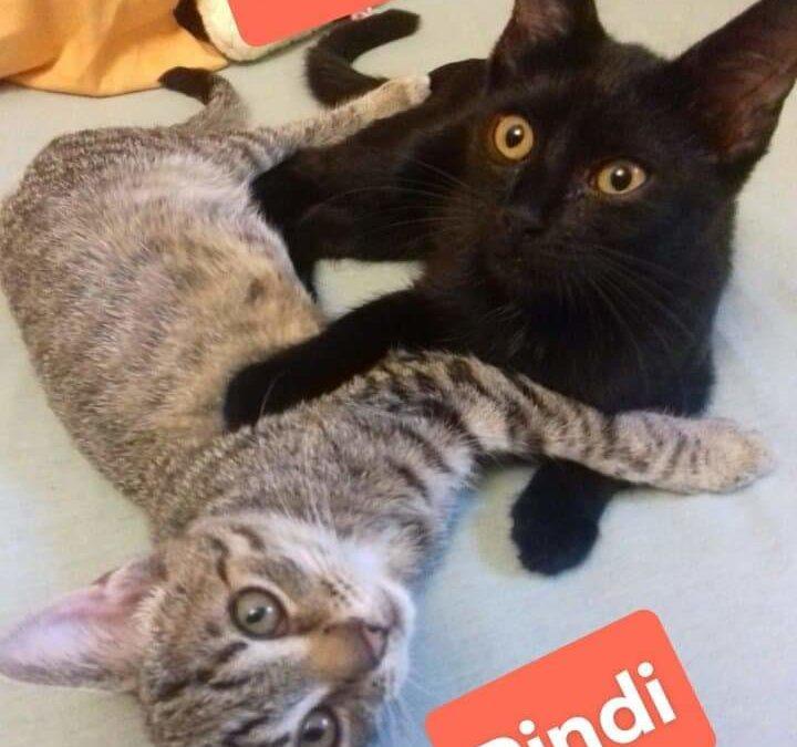 Indi und Pindi