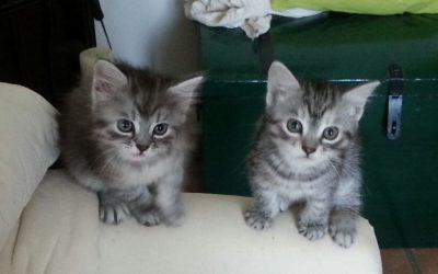 Vermittlungshilfe Katzenbabies